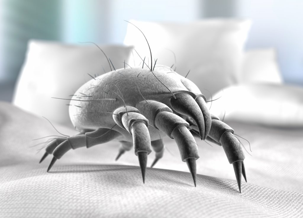 Is It Time for a New Mattress | Dust Mites in Mattress